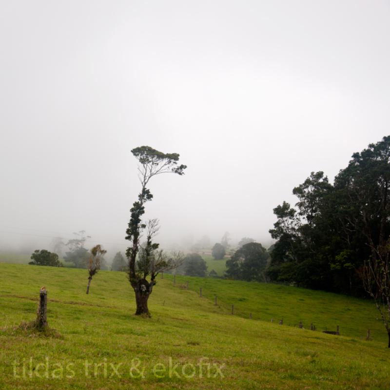 plantatree